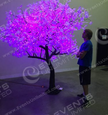Amazing lighted trees available for parties and events.