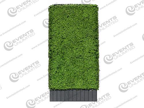 boxwood_hedges_rental-1