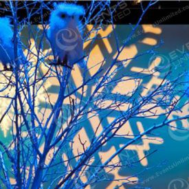 Design and Decor for winter theme