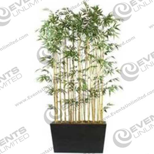 Bamboo Shrubs