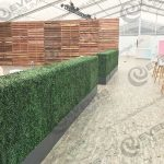 Boxwood Hedges - Portland Event Decor