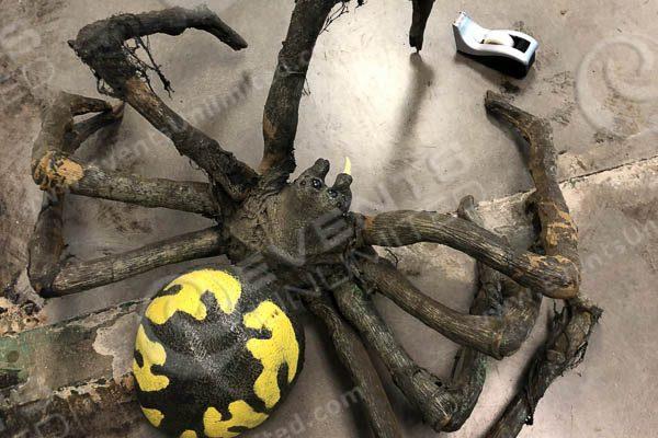 spider prop